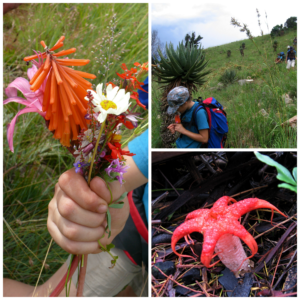 A little girl collects flowers while hiking in Mpumalanga