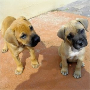 Two curious little puppies