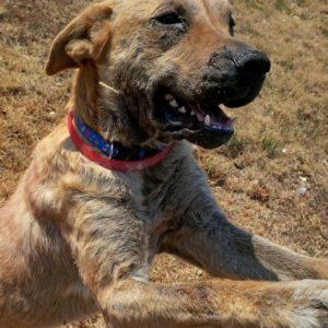 a happy rescue dog