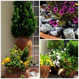 Many flower pots